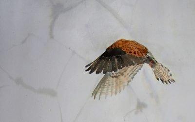 Kim Rebecca | The Birdwatcher